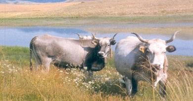 Zootecnia, montagna e agricoltura sociale il filo conduttore di AgriSila